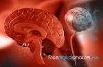human-brain-100214120